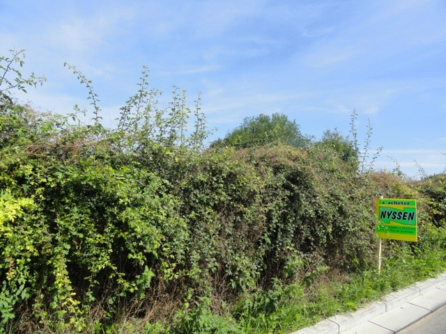 BAELEN: Terrain à bâtir + terrain agricole
